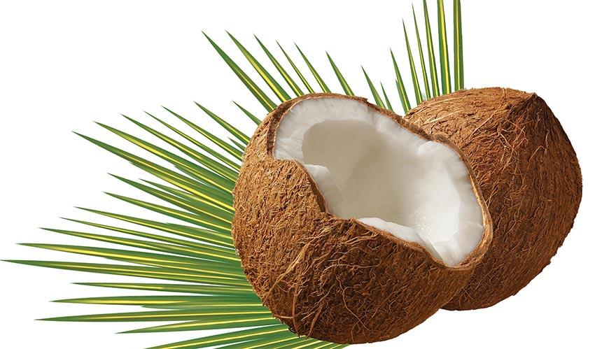 限定セール!JASオーガニックココナッツオイル