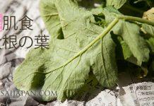 大根の葉の栄養を高める方法