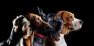 犬の飼い方初心者が知っておくべきこと